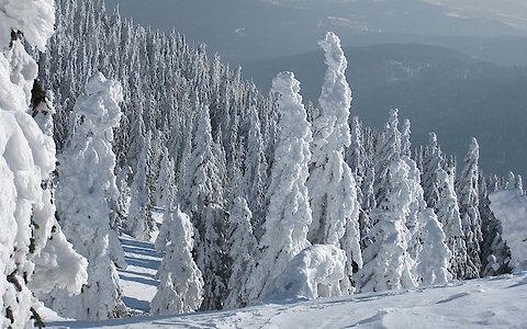 Weihnachtsurlaub im Bayerischen Wald
